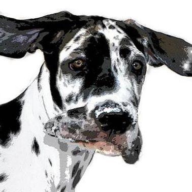Mr. Wilson - Deutsche Dogge
